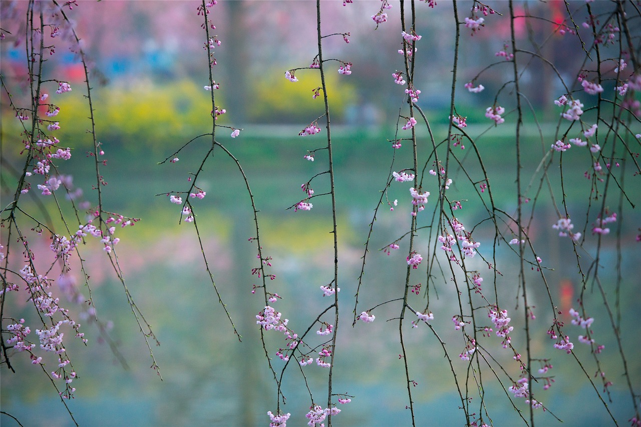 spring-1256810_1280